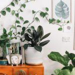 Las cinco plantas de interior más resistentes