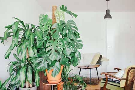 Las Plantas De Interior Y Todos Sus Trucos